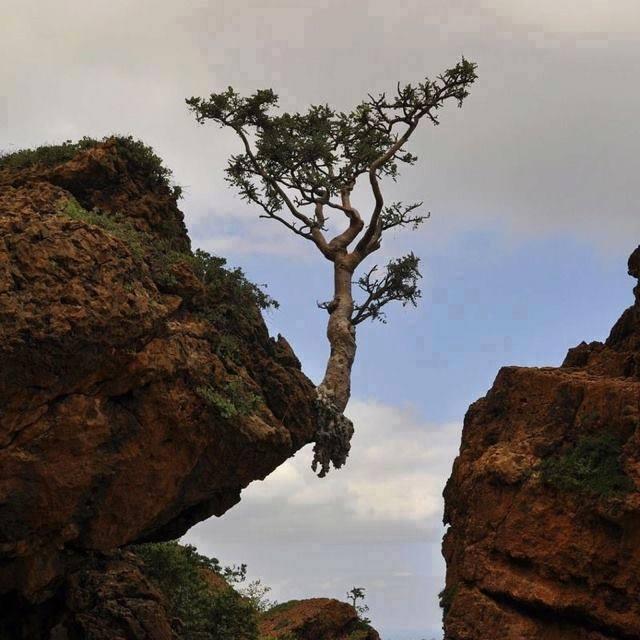 gamtos-galia